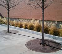 should ornamental grasses be cut back for the winter lot lines