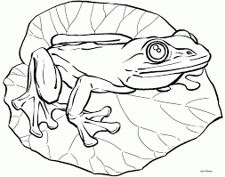 coloring pages fascinating coloring pages draw frog kids