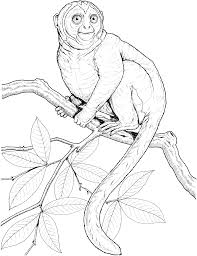 print tutorial animated coloring pages monkey image 0019 animal