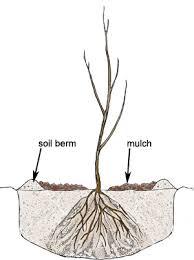 how to plant bare root trees bare root shrubs gardener s supply