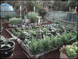 raised bed gardening for growing vegetables without digging