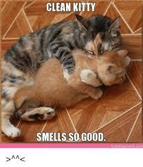 Cute Kitty Memes - clean kitty smells so good cute captions com cute meme on me me