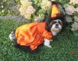 Spider Dog Halloween Costume Adorable Furry Reddish Brown Woodland Dog Halloween Costume