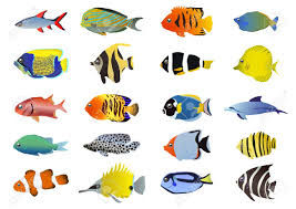 set of tropical fishes illustration royalty free cliparts