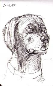 two not very good attempts at sketching a dog one drawing daily