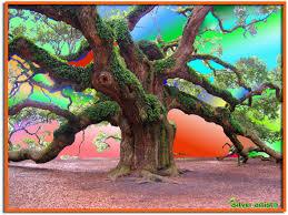 majestic tree tim flickr
