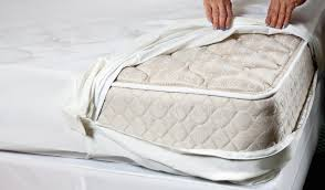 What Causes Bed Bugs To Come Out What To Do If You Have Bed Bugs And What Not To Do
