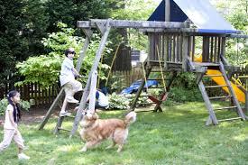 Dog Backyard Playground by Free Picture Children Playground Play Cute Dog