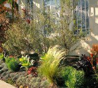 Drought Tolerant Backyard Ideas Tolerant Garden Ideas Landscape Contemporary With Drought Tolerant