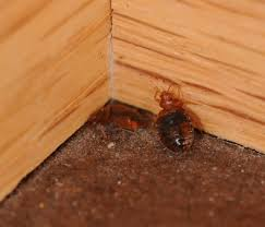 Bed Bugs In Ohio Bed Bugs Columbus Ohio Hotels Home Beds Decoration