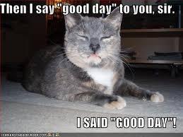 Good Day Sir Meme - stuff by cher good day sir i said good day