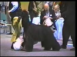 afghan hound national dog show 1996 ahca national specialty 4 6 best of breed youtube