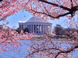 55 best national cherry blossom festival washington d c images