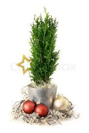 ab spr che weihnachten dekoration absprache mit zypressen und glaskugeln