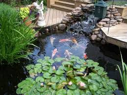 triyae com u003d backyard koi fish pond various design inspiration