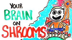 your brain on shrooms youtube