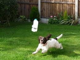 backyard toys for dogs outdoor goods