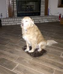 large dog accidentally gets extra small dog bed loves it people com