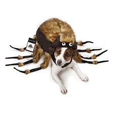 Halloween Costume Ideas For Pets Best 25 Spider Costume For Dogs Ideas On Pinterest Dog Spider