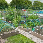 home vegetable garden design luxury home ve able garden design