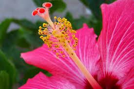 pin by gur inbar porcelove on floral inspiration