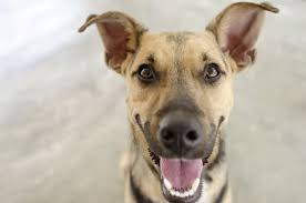 6 things that give your pet gas animal hospital of west chester