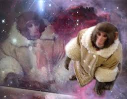 Ikea Monkey Meme - hilarious ikea monkey memes 32 pics 2 gifs picture 21