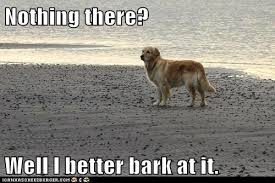 Dog Barking Meme - nothing there well i better bark at it i has a hotdog dog