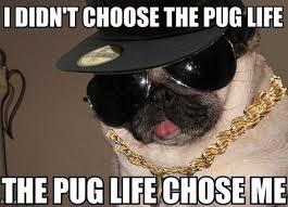 Grumpy Dog Meme - wpid dog meme pug life jpg meme my day