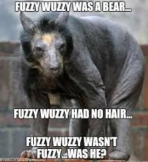 Hairless Bear Meme - fuzzy wuzzy does exist imgflip