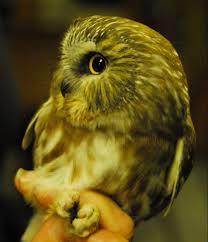 missouri river bird observatory u2013 a 501 c 3 non profit