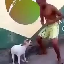 Dancing Dog Meme - pls come to brazil coub gifs with sound
