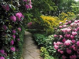 36 best woodland gardens images on pinterest woodland garden
