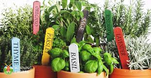 lights to grow herbs indoors 3 easy steps to growing herbs indoors and 5 herb garden inspiration