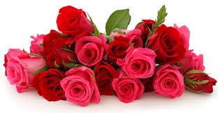 valentine roses giftalove com