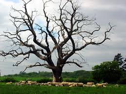 dead tree no visual amenity value awa tree