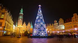 wroclaw poland november december 2016 tree in