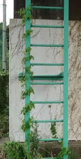 climbing plant wikiwand