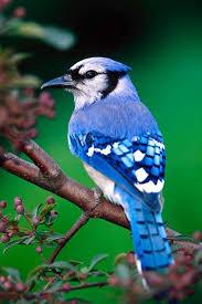 bird wallpaper melglqizvwvg7y3x09dwoa 0dagqxo9 ob svvjy7jr 0unltsgig afpuy09p6fxrq h900