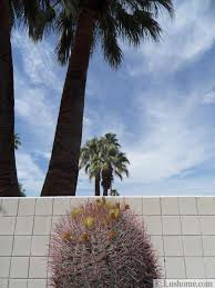 Modern Front Yard Desert Landscaping With Palm Tree And Desert Landscaping Ideas To Save Water And Create Low Maintenance