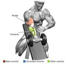 Bench Bicep Curls Biceps Standing One Arm Dumbbell Curl Over Incline Bench