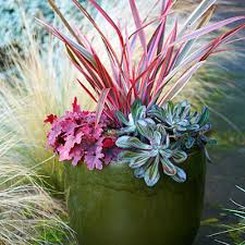 Plant Combination Ideas For Container Gardens Creative Container Gardens Saybrook Homes