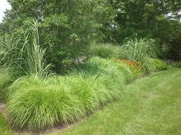 garden design garden design with ornamental grasses on