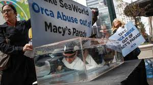 peta plans protest for macy s thanksgiving day parade
