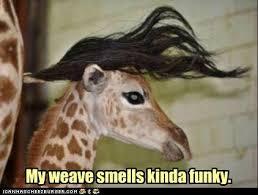 Giraffe Meme - giraffe weave meme funny things pinterest giraffe meme and humor