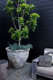 hardy native australian plants style tip tree potting u2014 adam robinson design