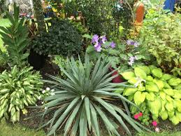 182 best tropical landscaping ideas images on pinterest
