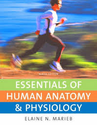 Pearson Anatomy And Physiology Lab Manual Anatomy Image Organs Page 147 Human Anatomy And Physiology