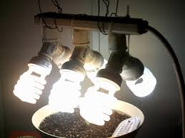 cfl grow lights for indoor plants is one 25 watt cfl enough to grow 2 plants rollitup