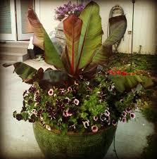 Flower Pot Arrangements For The Patio The Plant Farm The Plant Farm